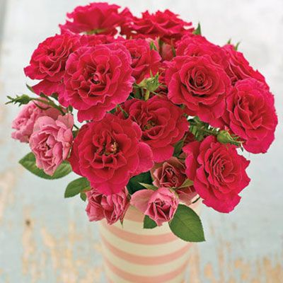 Flower meanings what valentines day flowers mean image mightylinksfo