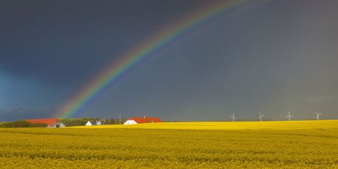 Green, Daytime, Sky, Yellow, Natural environment, Natural landscape, Agriculture, Farm, Colorfulness, Rainbow,