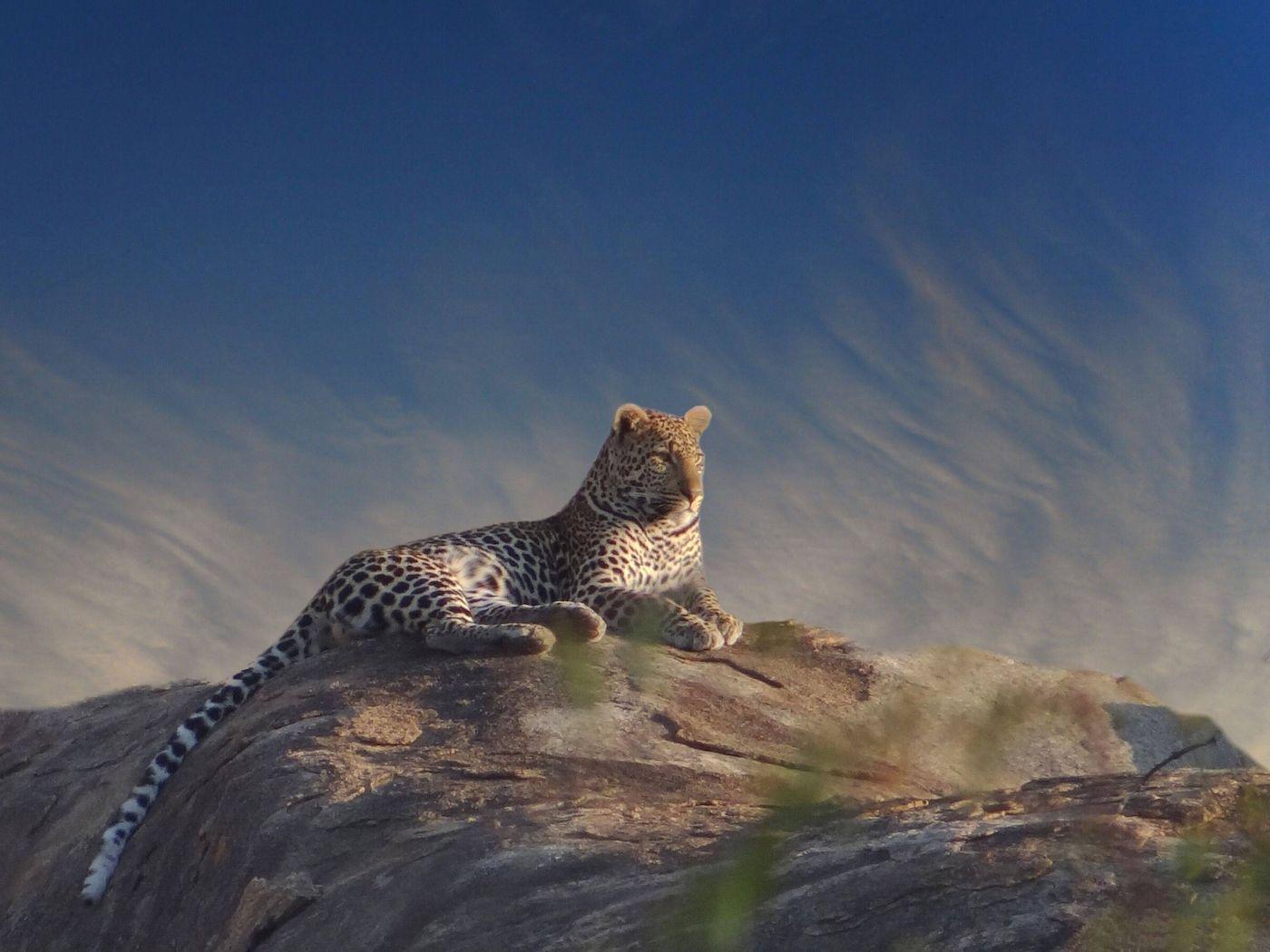 """<p>Se il vostro sogno è fare un safari fotografico alla ricerca dei Big Five (leoni, leopardi, rinoceronti, elefanti e bufali), i cinque grandi animali della savana, la meta che fa per voi è il Kruger National Park, la più grande riserva naturale del <strong>Sudafrica</strong> (<em><a href=""""http://country.southafrica.net"""">http://country.southafrica.net</a></em>), estesa su un'area di circa 20.000 km². Il viaggio prosegue verso Mpumalanga, il """"luogo dove sorge il Sole"""", una provincia ricca di flora e fauna protette in riserve naturali. Dopo una tappa a Johannesburg sulle orme di Nelson Mandela, la meta successiva è la bellissima Cape Town, punto di partenza per escursioni al Capo di Buona Speranza, alla spiaggia di Boulders Beach, che ospita una colonia di pinguini africani, e ai giardini botanici di Kirstenbosch. Con African Explorer quote a partire da 3.590 euro in camera doppia, compresa l'estensione balneare alle isole Seychelles (soggiorno al Paradise Sun dell'isola di Praslin). </p>"""