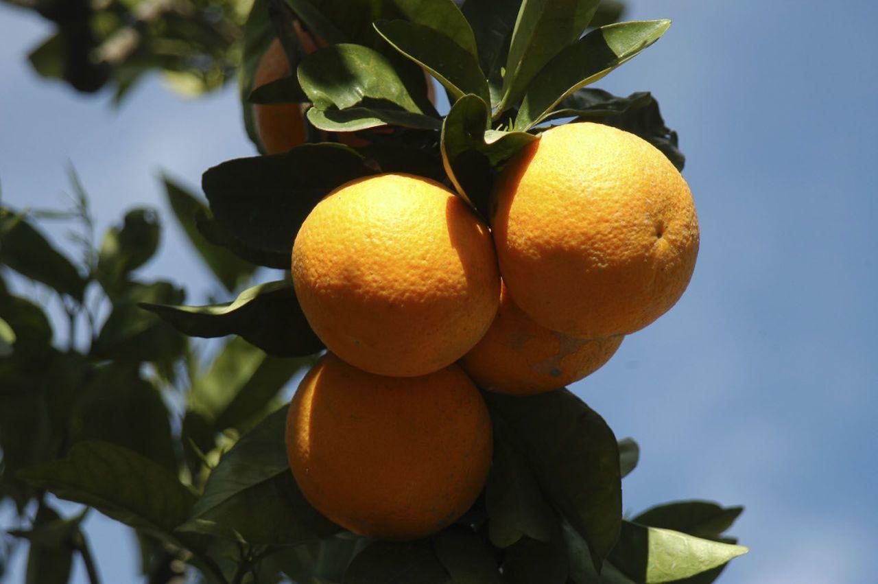 vitamina c buona per dimagrire
