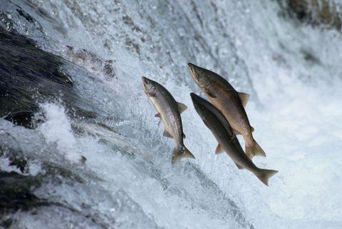 <p>Il salmone è uno degli alimenti migliori per la salute del cuore, in quanto ricco di omega 3. Inoltre ha un'alta concentrazione sia di acqua sia di potassio: pensa che un filetto da 100g contiene ben 490 milligrammi di potassio! Senza contare che il salmone puoi cucinarlo davvero in mille modi, senza usare condimenti, dato che è buonissimo già così: provalo cotto al vapore, insieme ad una manciata di olive nere, capperi e una spolverata di origano.</p>