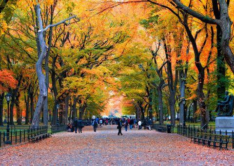 <p>Diamo i numeri: <strong>Central Park</strong> ha una superficie di 3,4 km quadrati – con 1 km quadrato di prati e mezzo km di bosco – 26mila alberi, oltre 9mila panchine, 36 ponti, 21 campi da gioco, 7 specchi d'acqua ed estesi sentieri. Tutte buone notizie per i 42 milioni di persone amanti della natura che lo visitano ogni anno.</p>
