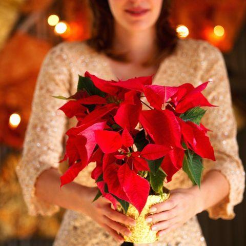 Stella Di Natale Pianta Come Mantenerla.Stella Di Natale Cure E Consigli Per Conservare A Lungo La Poinsettia