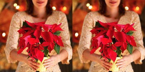 Come Mantenere Stella Di Natale.Stella Di Natale Cure E Consigli Per Conservare A Lungo La Poinsettia