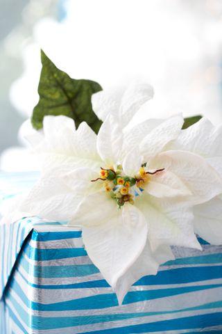 Stella Di Natale Luce.Stella Di Natale Cure E Consigli Per Conservare A Lungo La Poinsettia