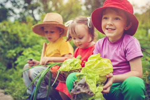 """<p>Seminare, innaffiare, prendersi cura della pianta, vederla crescere e poi raccoglierne i frutti. Non c'è modo migliore per abituare un bambino&nbsp;ai ritmi della natura e invogliarlo ad assaggiare le verdure raccolte insieme. Se non avete a disposizione un <strong data-redactor-tag=""""strong"""" data-verified=""""redactor"""">orto</strong> vero e proprio, basterà qualche vaso sul balcone dove seminare pomodori, cetrioli e qualche erba aromatica.</p>"""
