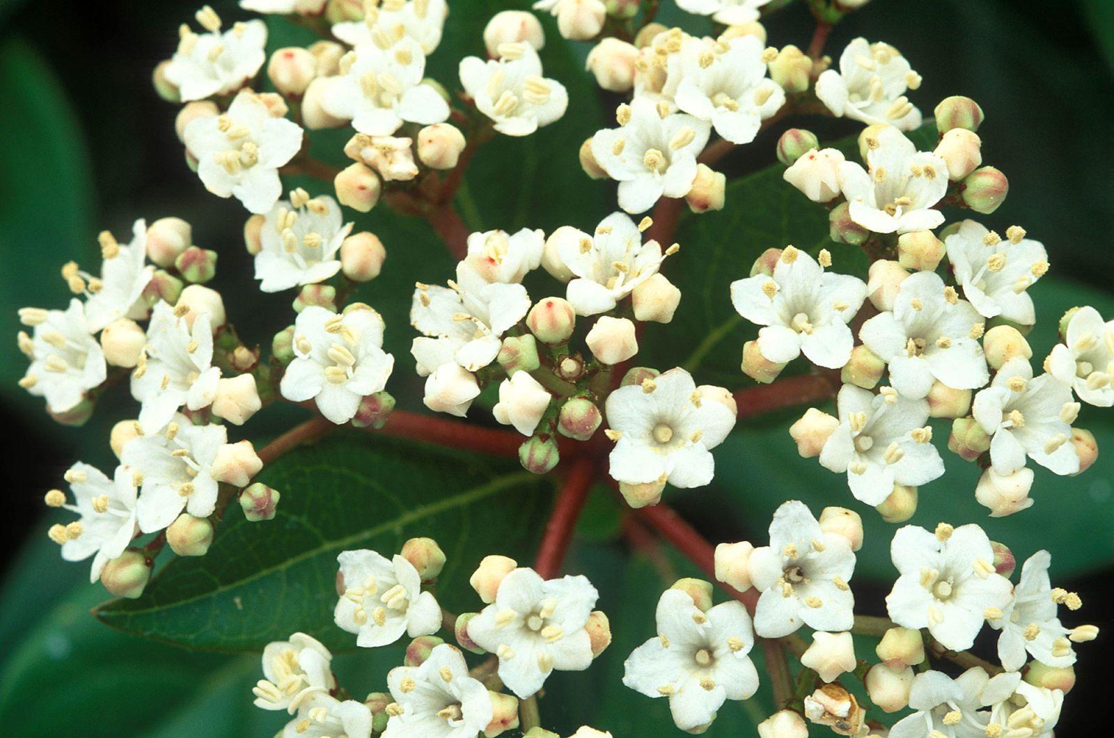 La varietà di fiori da giardino viole del pensiero messa a fuoco