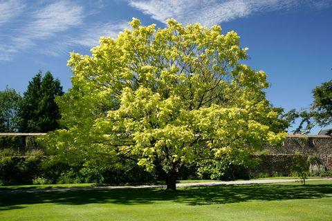 10 piante da esterno e tipi di fiori resistenti al freddo - Piante da giardino al sole ...