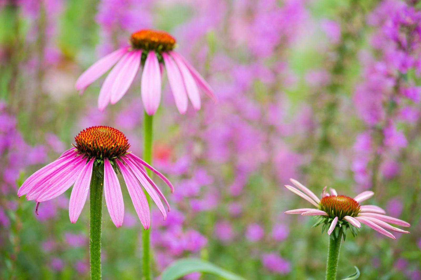 Piante da esterno e tipi di fiori resistenti al freddo e al sole