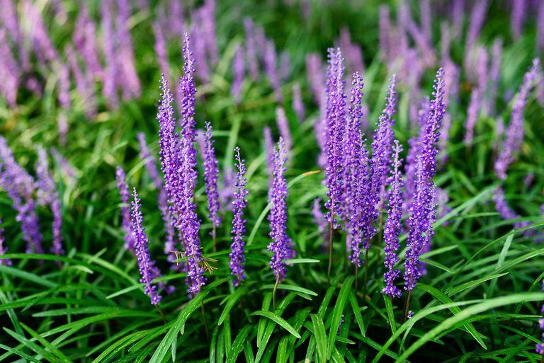 10 piante da esterno e tipi di fiori resistenti al freddo - Piante sempreverdi da giardino resistenti al freddo ...