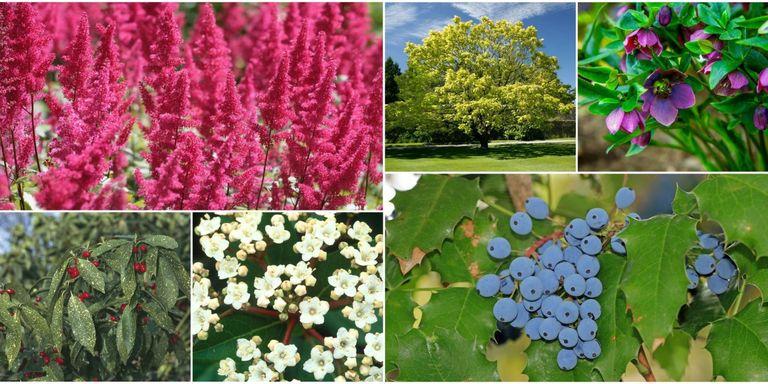 10 piante da esterno e tipi di fiori resistenti al freddo - Piante grasse da esterno pendenti ...