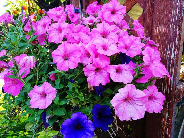 10 piante da esterno e tipi di fiori resistenti al freddo for Tipi di fiori