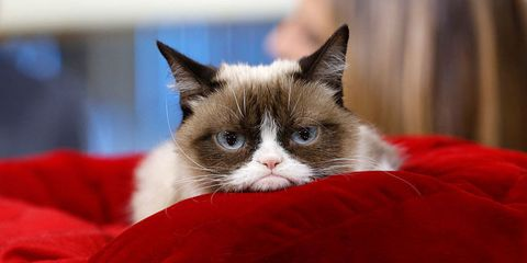 giornata-del-gatto-grumpy-cat