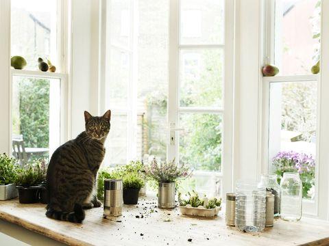 Plant, Small to medium-sized cats, Vertebrate, Felidae, Cat, Whiskers, Interior design, Mammal, Room, Flowerpot,