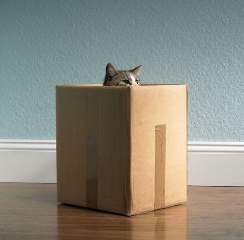 Wood, Flooring, Floor, Felidae, Wood stain, Hardwood, Carnivore, Small to medium-sized cats, Plywood, Cat,