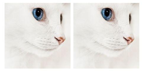 Skin, Vertebrate, White, Whiskers, Iris, Carnivore, Organ, Snout, Cat, Photography,