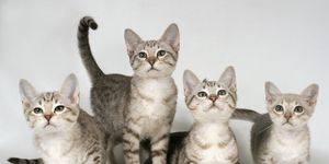 gatti-santuario-hawaii