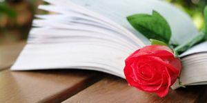 libreria-fiori-libri-con-una-rosa-roma