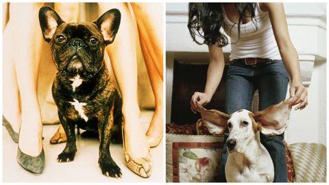 Come proteggere la salute del tuo cane con l'antiparassitario giusto
