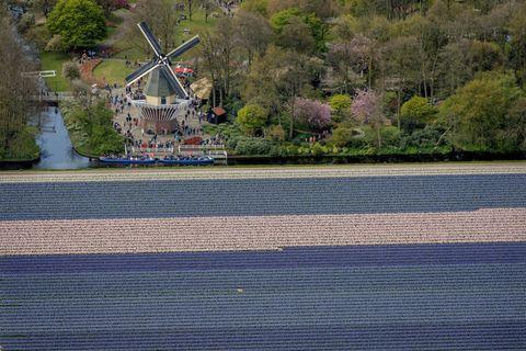 Amsterdam, cosa vedere a primavera: dal Keukenhof ai campi di tulipani