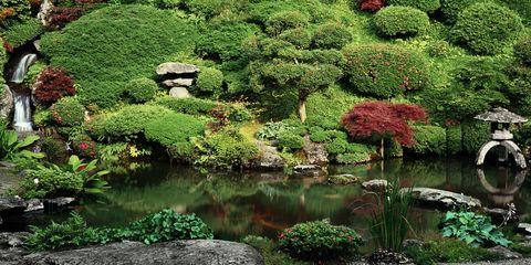 Giardino giapponese roma tutte le info - Piante per giardino giapponese ...