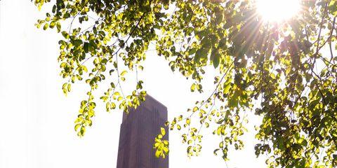 Yellow, Leaf, Facade, Sunlight, Sun, Lens flare, Tower, Brick,