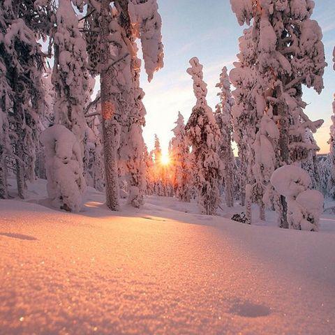 Winter, Branch, Freezing, Snow, Sunlight, Orange, Evening, Geological phenomenon, Biome, Morning,