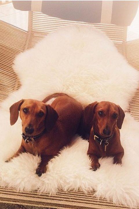rosie huntington-whiteley's dogs