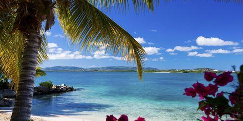 Body of water, Petal, Flower, Coastal and oceanic landforms, Landscape, Shore, Ocean, Magenta, Arecales, Tropics,