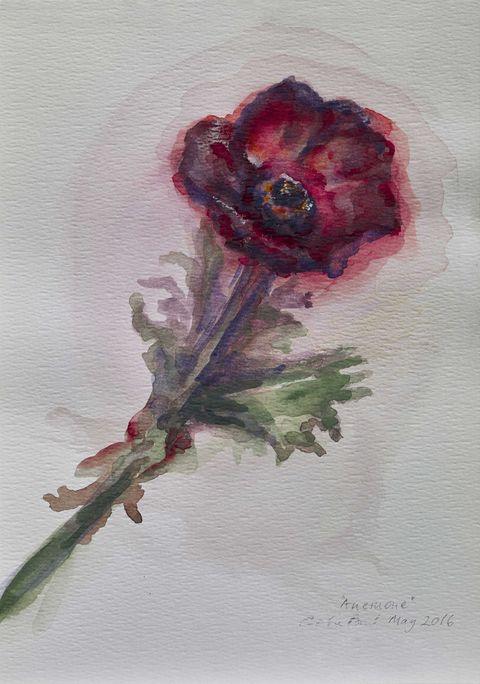 Anemone by Celia Paul