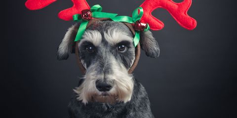 Christmas presents for pets – Gifts for dogs and cats