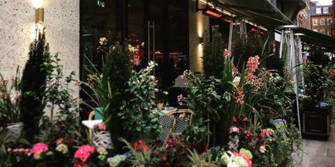 Window, Plant, Flower, Building, Mixed-use, Floristry, Apartment, Shrub, Signage, Flowerpot,