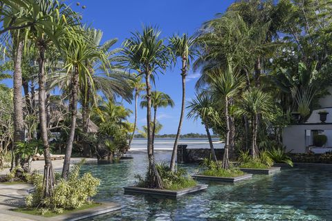 Plant, Arecales, Woody plant, Tropics, Resort, Garden, Water feature, Palm tree, Landscaping, Attalea speciosa,
