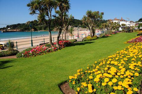 Grass, Plant, Flower, Landscape, Petal, Coastal and oceanic landforms, Garden, Woody plant, Walkway, Lawn,