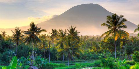 Vegetation, Nature, Sky, Plant, Natural landscape, Mountainous landforms, Landscape, Tree, Arecales, Garden,