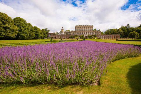 Lavender, Flower, Plant, Lavender, Garden, Purple, Flowering plant, English lavender, Botany, Botanical garden,