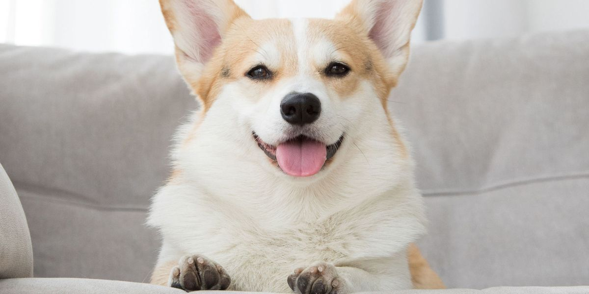 How To Make Your Dog Famous On Instagram 9 Top Tips