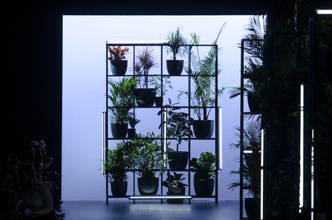 Tree, Architecture, Window, Plant, House, Houseplant, Glass, Facade, Flowerpot, Interior design,
