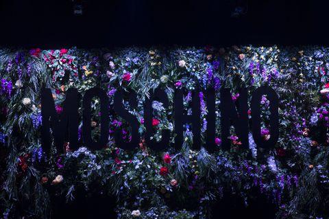 Purple, Violet, Lavender, Night, Plant, Tree, Flower, Crowd, Performance, Space,