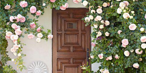Wood, Flower, Architecture, Door, Petal, Shrub, House, Woody plant, Home door, Botany,