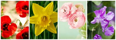 Best flowers for spring most popular spring flowers image mightylinksfo