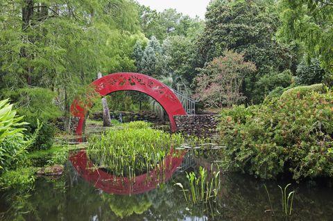 Body of water, Vegetation, Garden, Pond, Plant community, Natural landscape, Landscape, Reflection, Shrub, Botany,