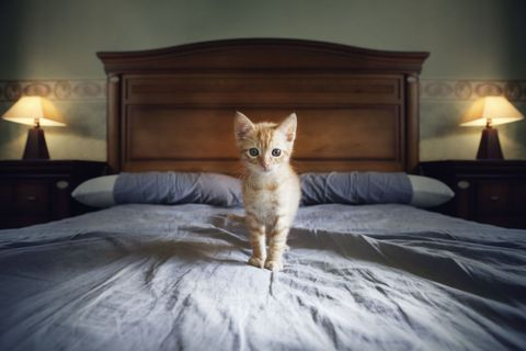 Why It's Impossible to Make Your Bed If You Have a Cat