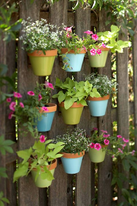 Flowerpot, Flower, Plant, Garden, Botany, Houseplant, Spring, Annual plant, Yard, Herb,