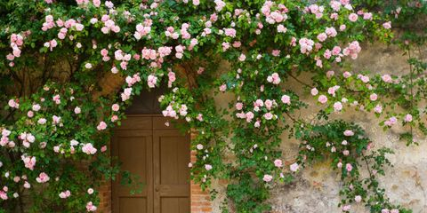 20 Charming Flower-Covered Entryways