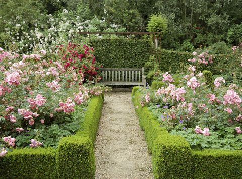 11 Essential Tips for Creating a Rose Garden