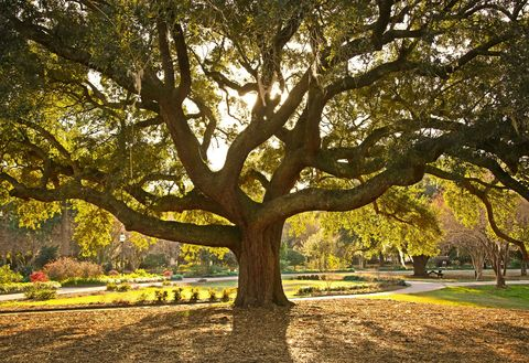 Meaning Of Trees The Symbolism Behind 11 Common Varieties