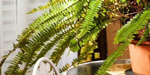 18 Houseplants That Help Purify Your Home's Air