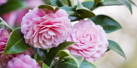 10 Beautiful Flowers With Surprising Meanings
