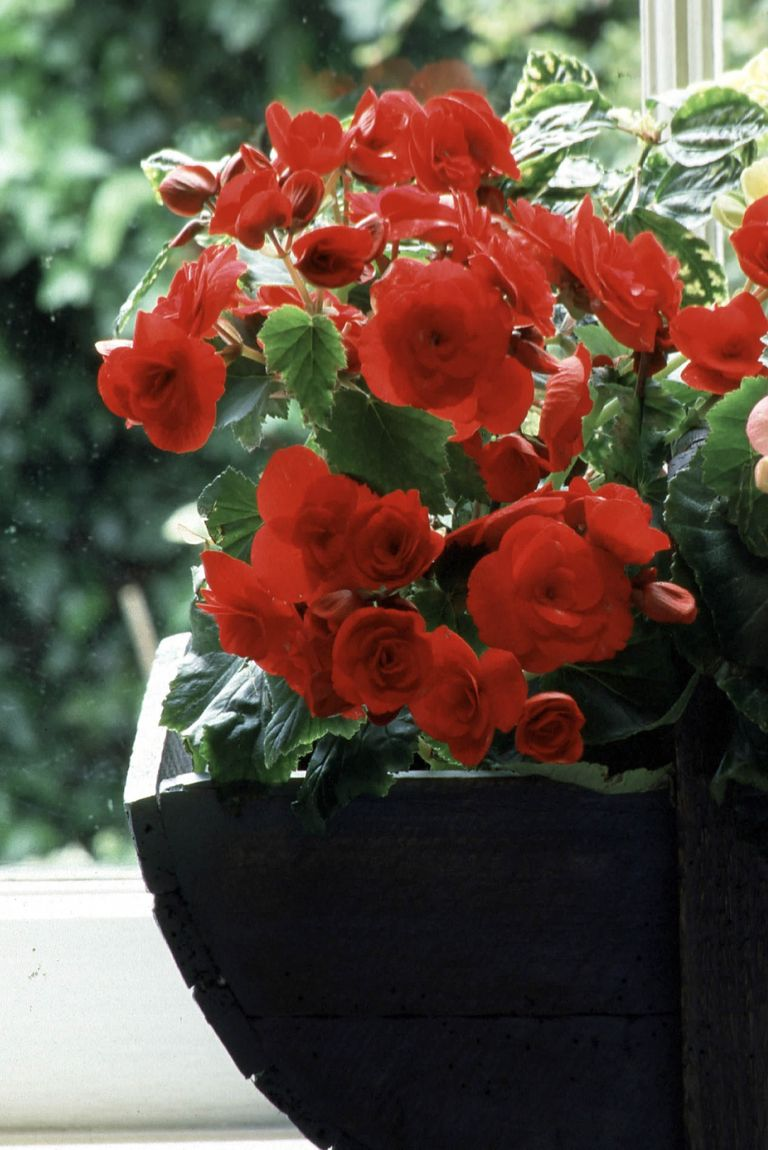 12 best house plants easy plants to care for for Easy plants to care for